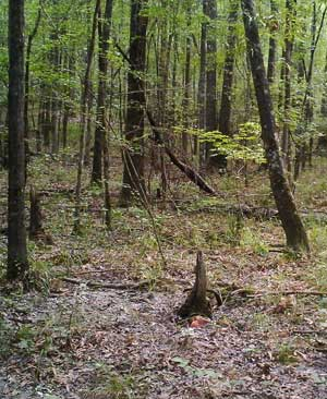 deer baiting site on trail camera