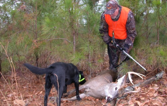 Hunting Dogs For Sale Utah